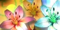 Псориаз(psoriasis vulgaris)-определение(заболевания кожи)